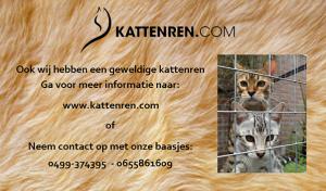 www.kattenren.com