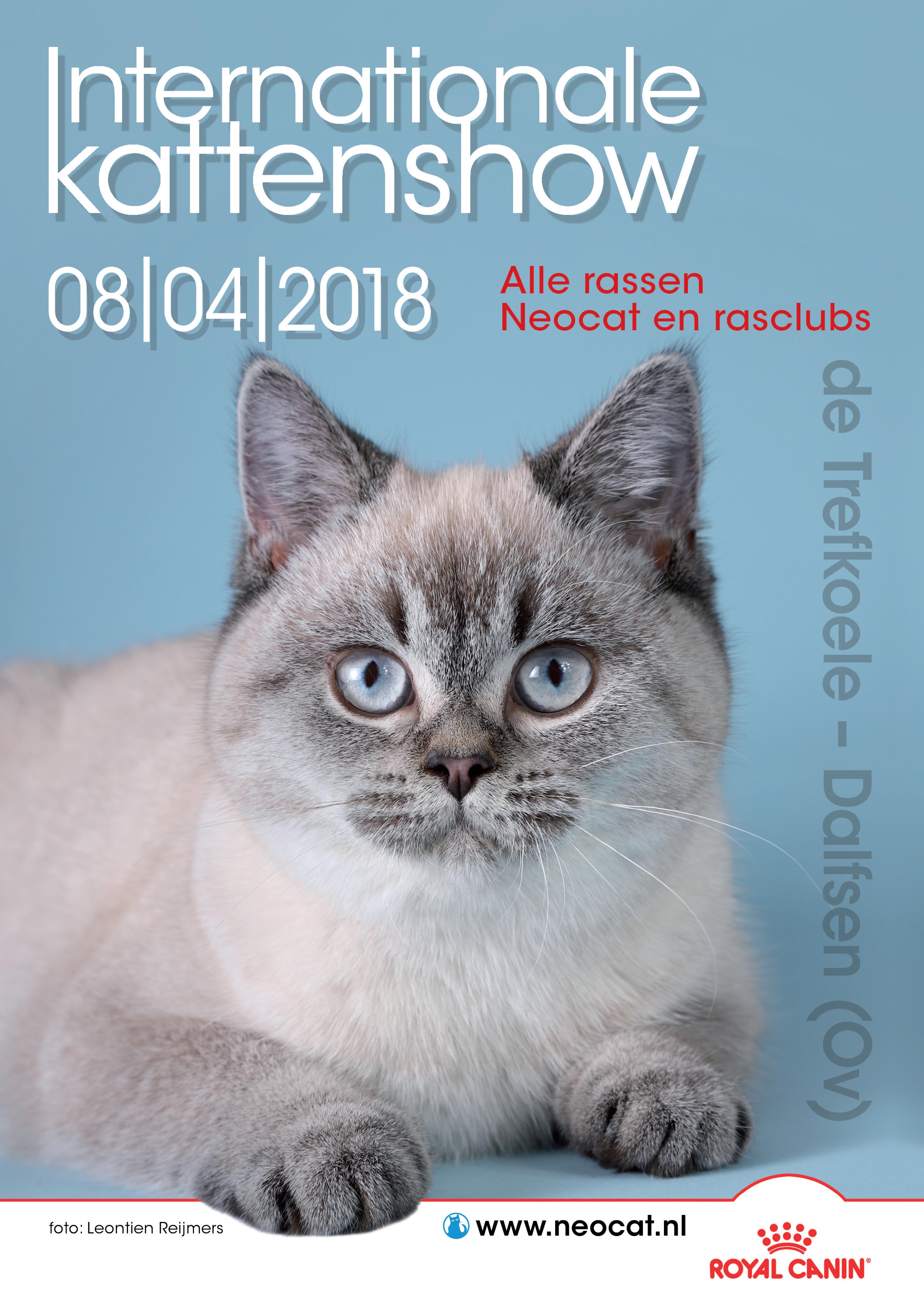 Kattenshow in Dalfsen